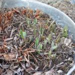 Early Spring Garden Update