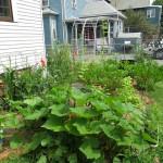 Garden Update – july 2014