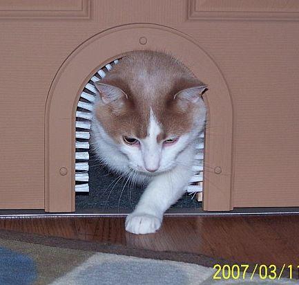 http://diysarah.com/wp-content/uploads/2019/11/cat20door20CA1cc.jpg